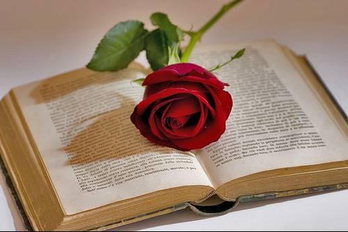 libro con rosa