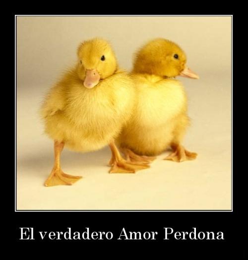 desmotivaciones.mx El verdadero Amor Perdona  133848560115 El verdadero amor