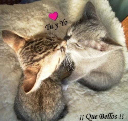 1242177267897 f Gatitos enamorados