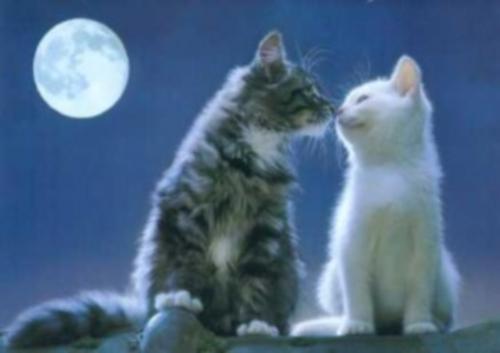 gatitos enamorados 300x212 Gatitos enamorados