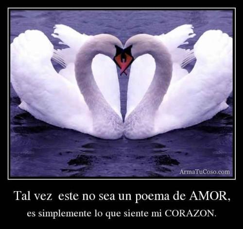 armatucoso-tal-vez-este-no-sea-un-poema-de-amor-1892843