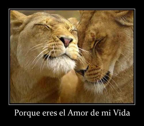 porque_eres_el_amor_de_mi_vida