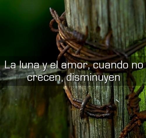 El amor es como la luna cuando no crece disminuye