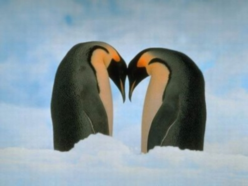 Amor de animales